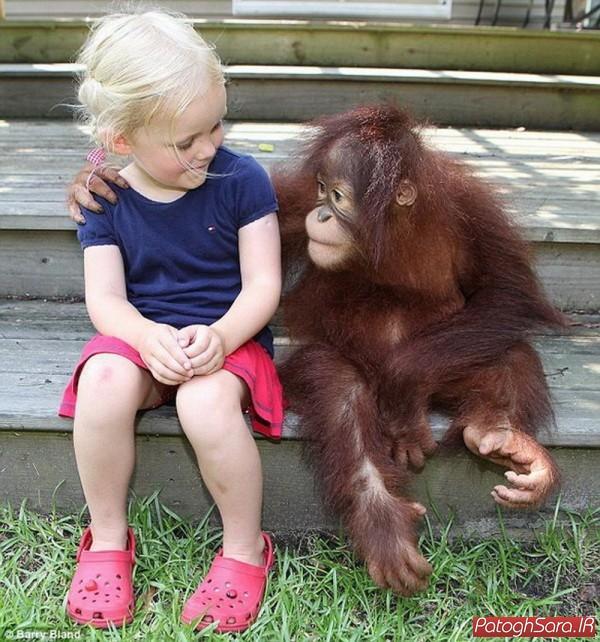 دوستی دختر کوچولو با اورانگوتان