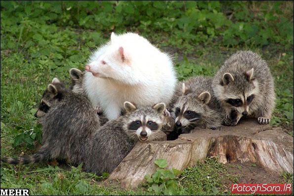 تصاویری دیدنی از نمونه های نادر حیوانات زال
