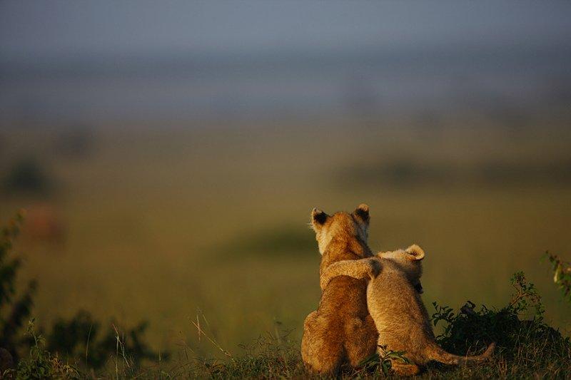عاشقانه ی حیوانات