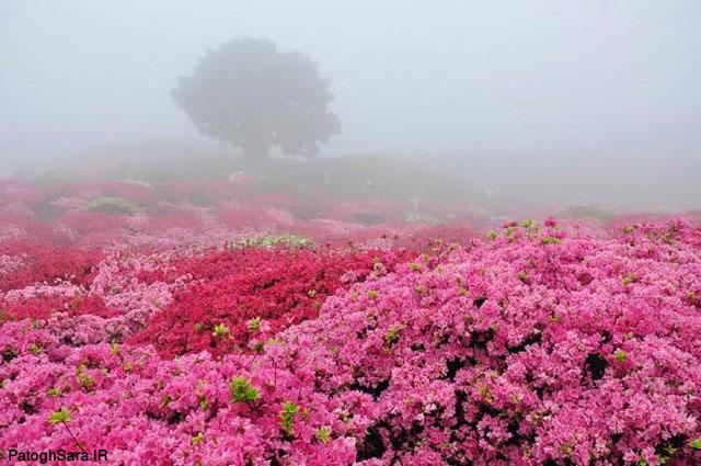 عکس های زیبا و دیدینی طبیعت