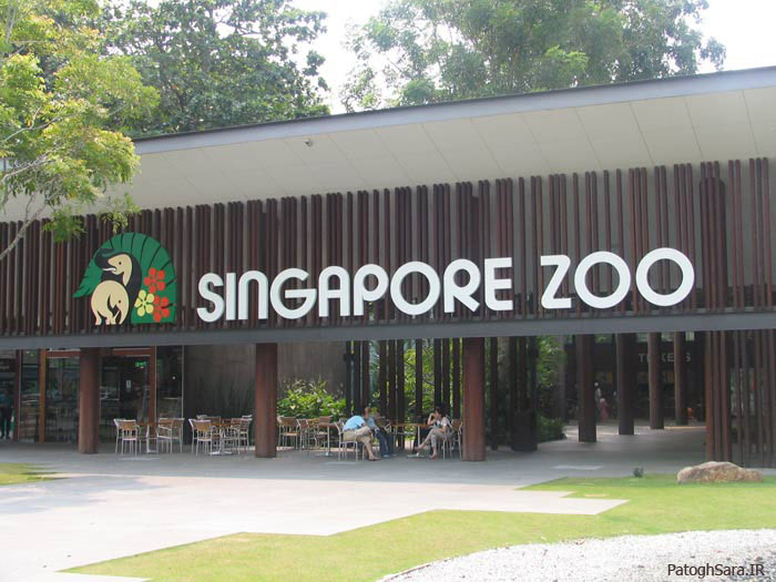 سفر به دنیای حیوانات در باغوحش سنگاپور