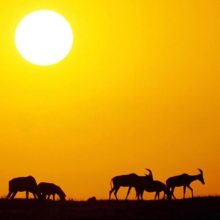 عکس هایی دیدنی و شگفت انگیز از دنیای حیوانات و پرندگان