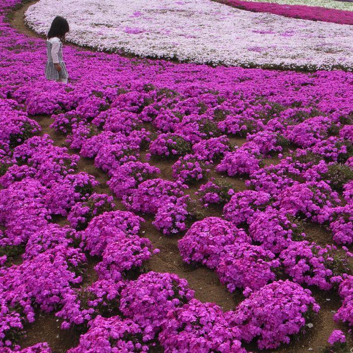 تصاویری زیبا از پارك هيتسو جي ياما ژاپن