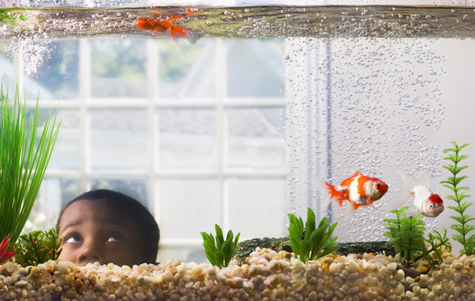 عکس هایی جالب از کودکان و حیوانات