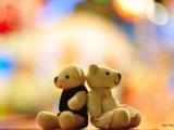 خرس کوچولو های ناز